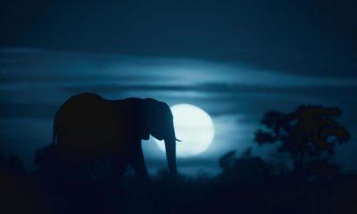 Notte sul pianeta Terra - Netflix