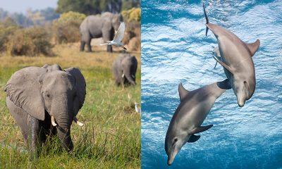 La Famiglia di Elefanti e Echo Il Delfino